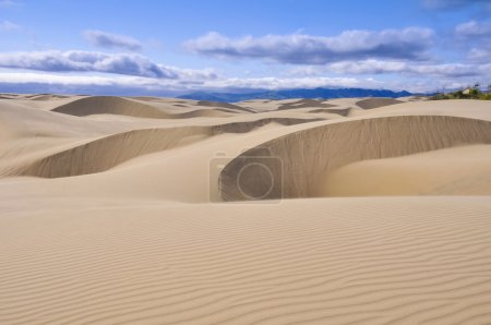 Photo pour Oceano Dunes Natural Preserve, Californie (États-Unis ) - image libre de droit