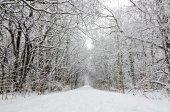 Stromy sněhem