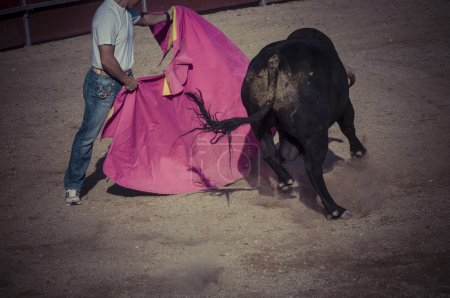 Fighting bull picture from Spain.