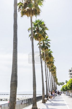 Promenade along the sea of palm trees