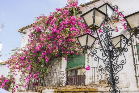 Architecture and streets with flowers