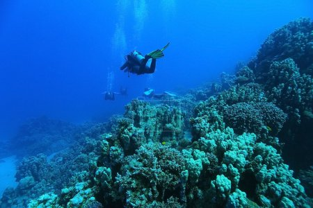 divers underwater the sea