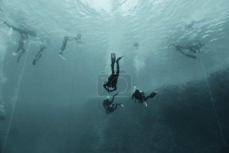 freediving scuba photo
