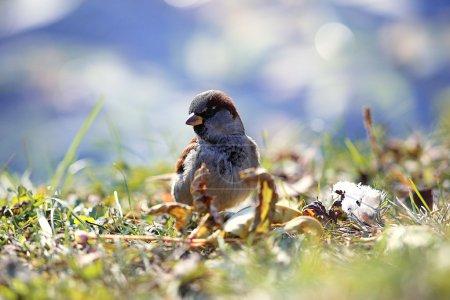 Sparrow bird on background
