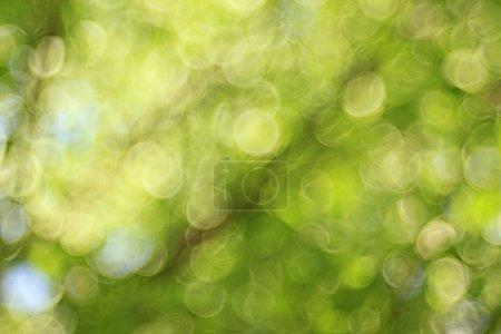 Foto de Blurred green leaves background with bokeh - Imagen libre de derechos