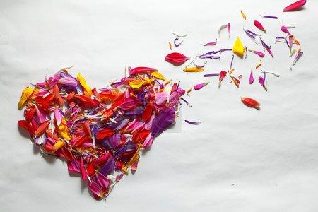 Photo pour Coeur de pétales de fleurs colorées sur fond blanc - image libre de droit