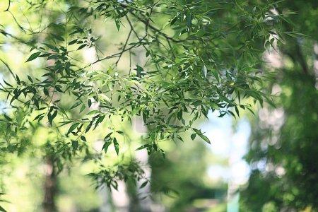 Photo pour Branche avec jeunes verts feuilles fond - image libre de droit