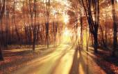 Světelné paprsky v podzimním parku
