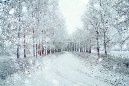 Photo pour Nature paysage hiver sans que les gens - image libre de droit