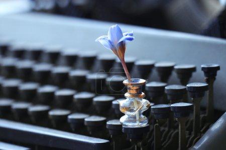 Photo pour Fleurs de crocus bleu debout sur fond de machine à écrire - image libre de droit