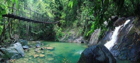 Rope bridge in jungle