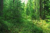 dense forest landscape