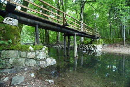 Photo pour Paysage forestier en été europe pin - image libre de droit