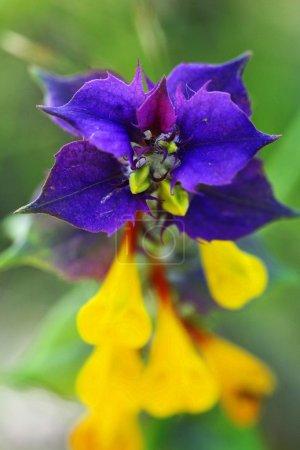 Purple beautiful flowers