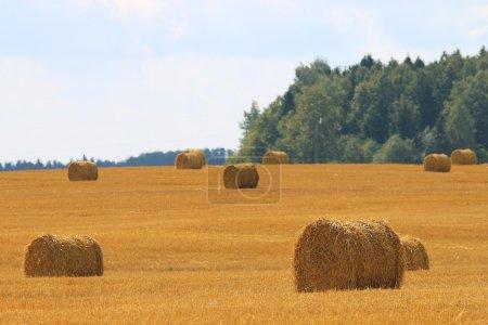 grain harvest expanse