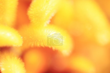 macro flower background