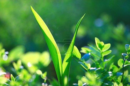 Foto de Hierba fresca en el fondo de Selva Verde eco - Imagen libre de derechos