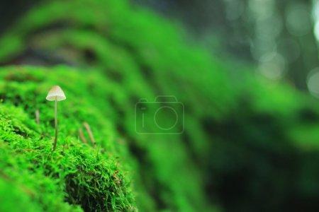 Small mushroom toadstool