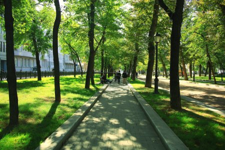 Park trees alley
