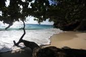 Jungle on a beautiful island