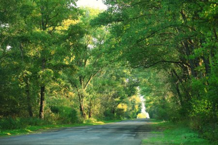 Road in summer landscape