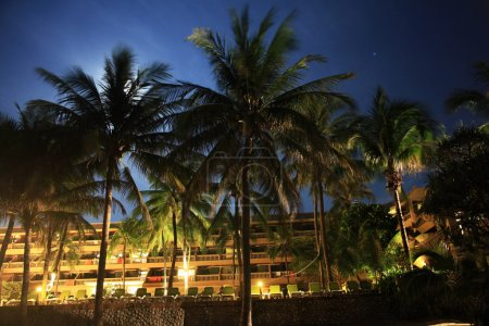 tropical palms at night