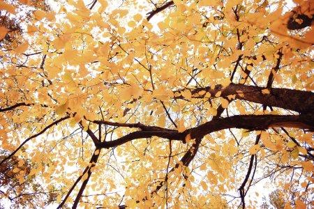 Photo pour Chercher des branches d'arbres automne fond - image libre de droit