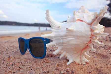 Photo pour Conque tropicale sur une plage de sable fin - image libre de droit