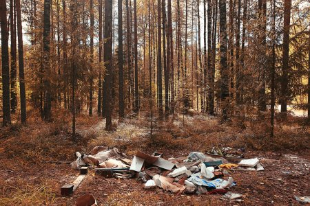 garbage dump in the woods