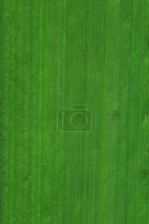 Photo for Green leaf texture blurred grass - Royalty Free Image