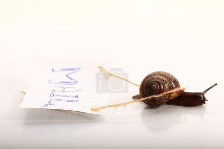 snail macro on light surface