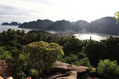 jungle on  beautiful island
