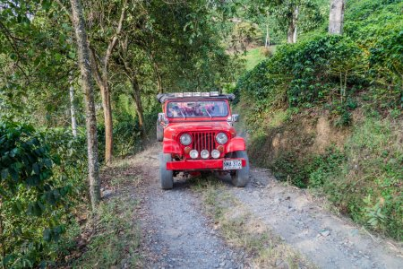 Workers ride a jeep at Coffee plantation