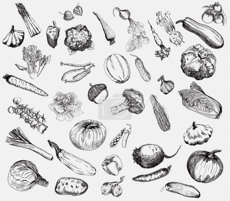 Illustration for Set of vector icons on the theme of vegetables - Royalty Free Image