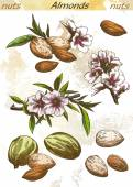 Almonds set of vector color sketches on an abstract background