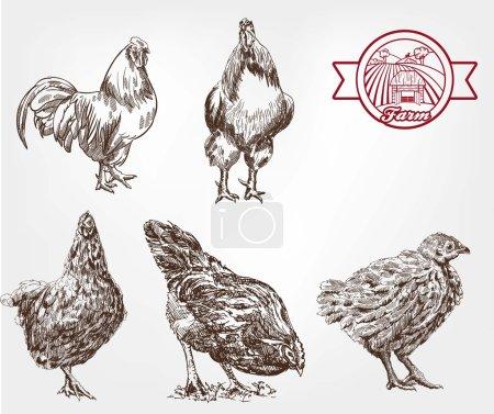 poultry breeding