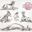 Goat breeding. set of sketches made by hand...
