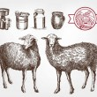 Sheep breeding. set of sketches made by hand...