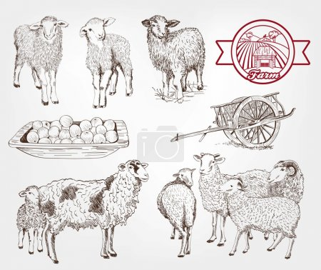 Illustration for Sheep breeding. set of sketches made by hand - Royalty Free Image