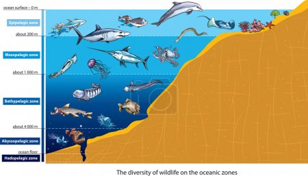 Illustration for Layers of the ocean (deep sea creatures). - Royalty Free Image