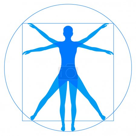 Vetruvian Man, human anatomy