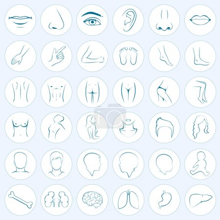Illustration for Human body parts, five senses, organs, medical vector icons - Royalty Free Image
