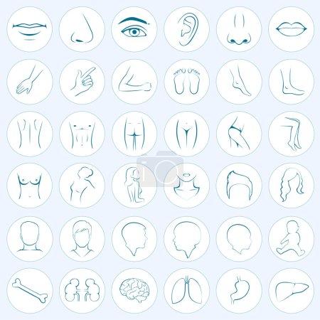 body parts, five senses