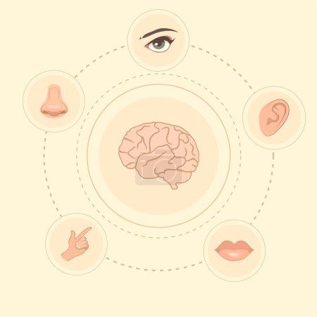Vector five senses icons,