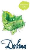 Yaprak dolma turkish cuisine stuffed grape leaves hand drawn watercolor - vector Illustration