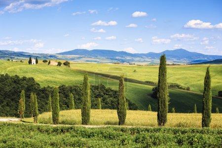 Tuscany landscape, cypress trees
