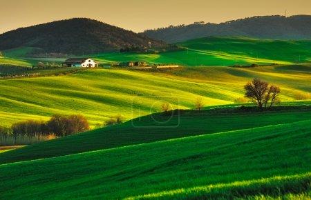 Les arbres et les terres agricoles près de Volterra, collines sur coucher de soleil. Rural