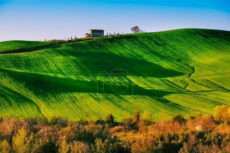 Trees and Farmland near Volterra, rolling hills on sunset. Rural