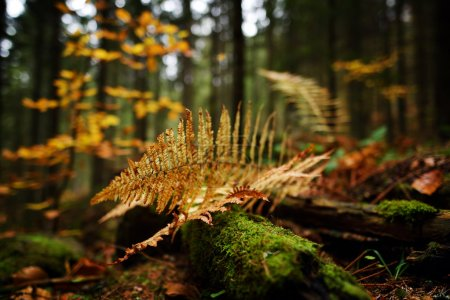 autumn fern leaves in the forest