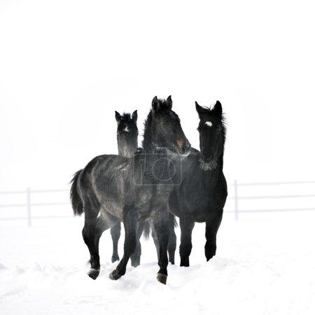Hermoso caballo corriendo en invierno